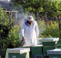 calitatea mierii